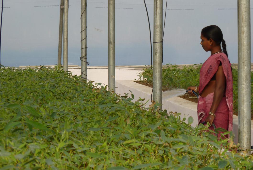 Femme entrain d'arroser des plantes