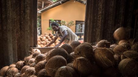 Noix de coco dans un container avec dans le fond un homme entrain de travailler