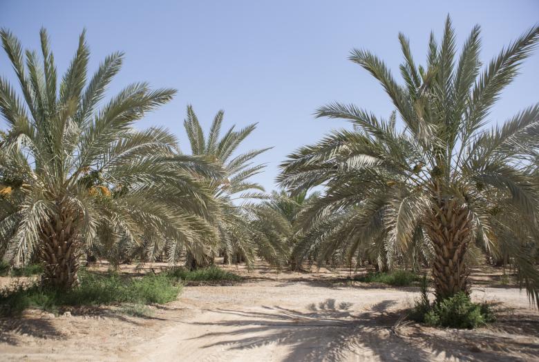 Projet Nakheel Palestine
