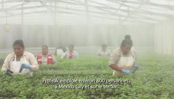 femmes, Proteak, emplois